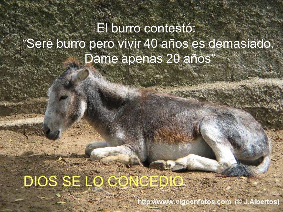 Dios creó al burro y dijo: Serás burro, trabajarás incansablemente de sol a sol, cargando bolsas en el lomo; comerás pasto, no tendrás inteligencia...