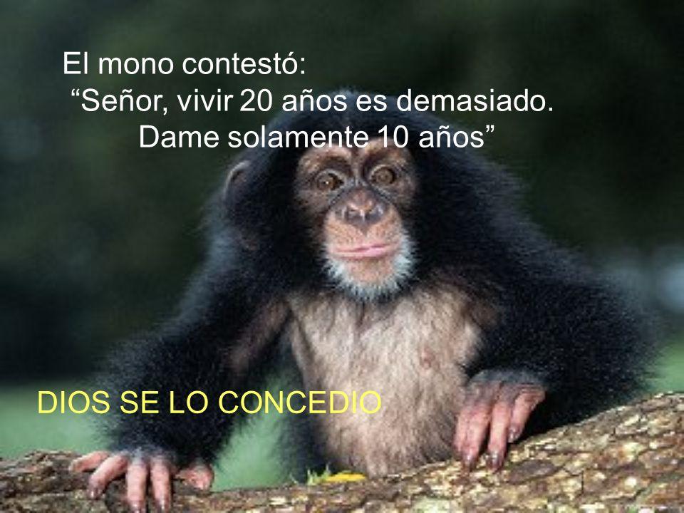 Dios creó al mono y dijo: Serás mono, saltarás de rama en rama, haciendo payasadas, serás divertido y vivirás 20 años. SERAS MONO