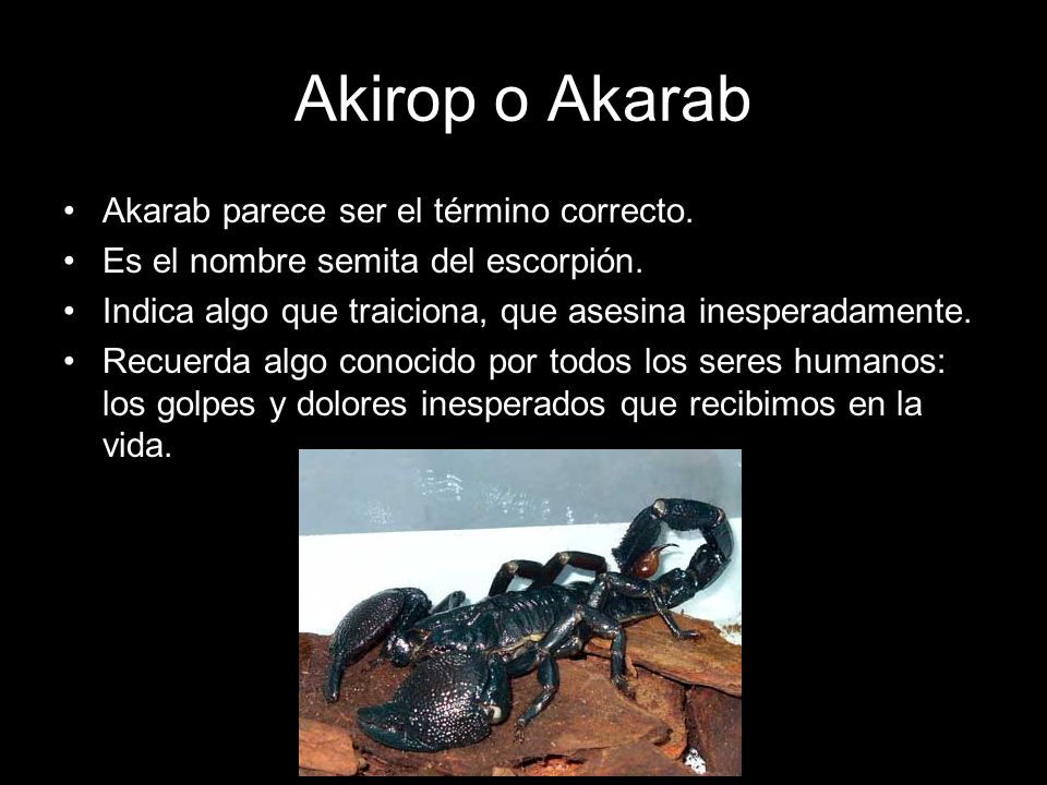 Akirop o Akarab Akarab parece ser el término correcto. Es el nombre semita del escorpión. Indica algo que traiciona, que asesina inesperadamente. Recu