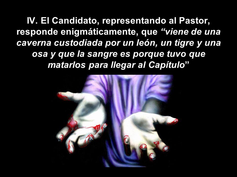 IV. El Candidato, representando al Pastor, responde enigmáticamente, que viene de una caverna custodiada por un león, un tigre y una osa y que la sang