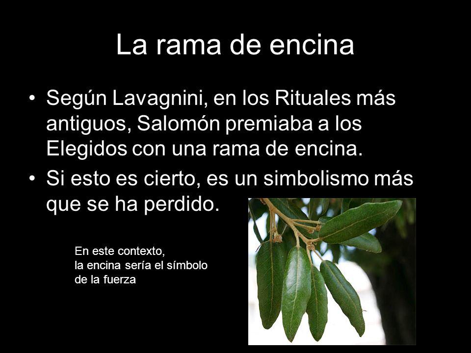 La rama de encina Según Lavagnini, en los Rituales más antiguos, Salomón premiaba a los Elegidos con una rama de encina. Si esto es cierto, es un simb