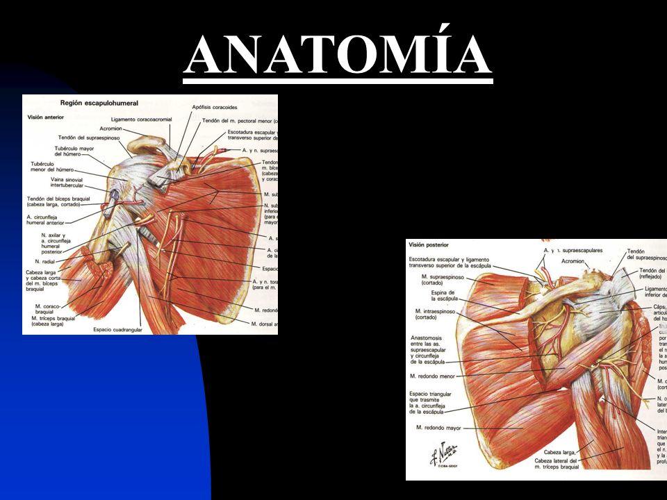 27 DIAGNOSTICO CLINICO: MANIOBRAS: HAWKINS (92%) NEER (82%) YERGASON. >SENSIBILIDAD <ESPECIFICIDAD.