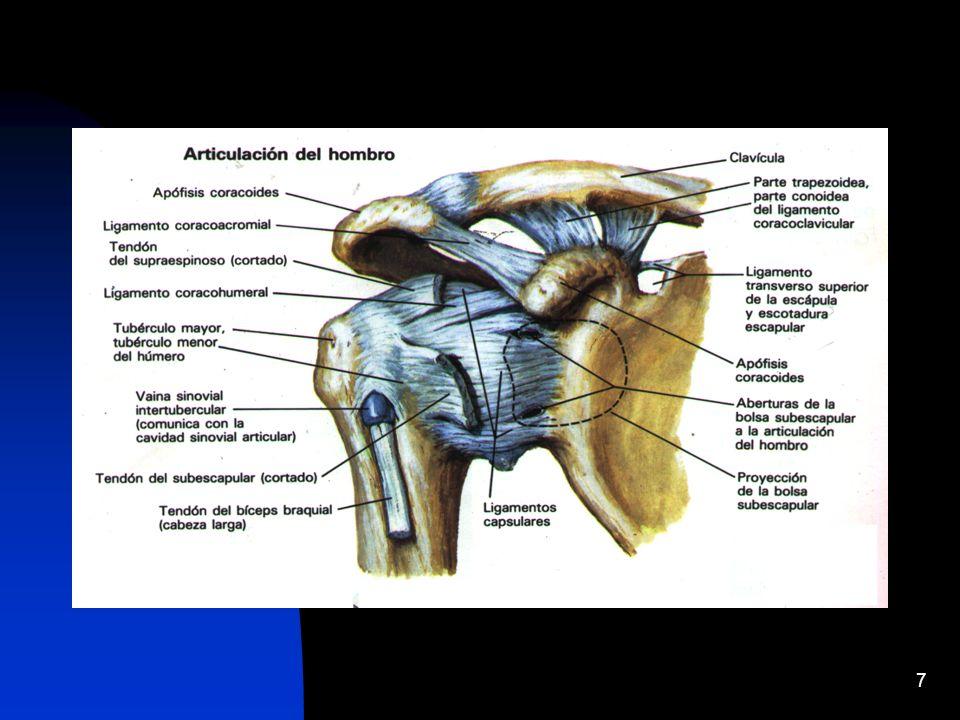28 RAYOS X - 1960: se le llamaba al hombro la articulación perdida - se contaba únicamente con radiografías simples - 90 % de estas radiografías eran normales en los pacientes con hombro doloroso crónico.