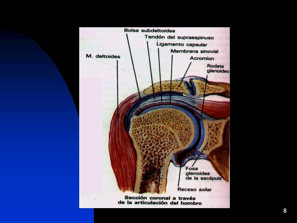 29 - técnica ideal que es accesible a la población con síndrome de hombro doloroso - nos permite distinguir entre edema y ruptura del manguito de los rotadores, en la mayoría de los casos - se reporta una especificidad y sensibilidad de más del 90 %.