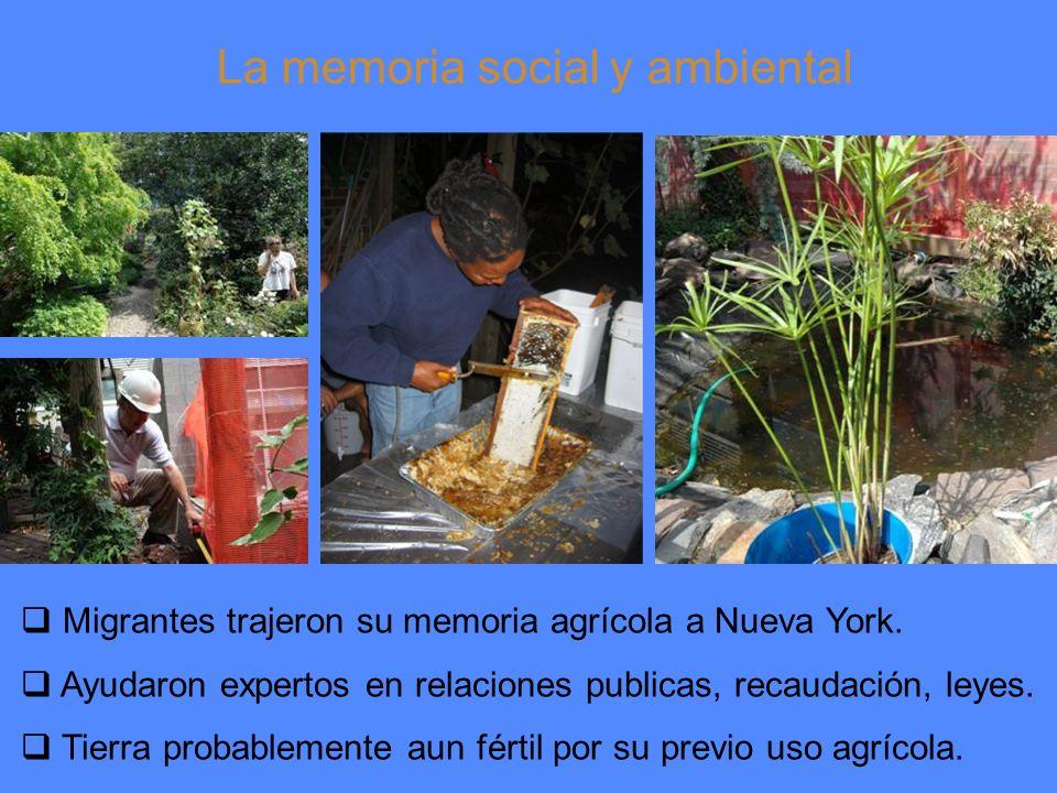 La memoria social y ambiental Migrantes trajeron su memoria agrícola a Nueva York.
