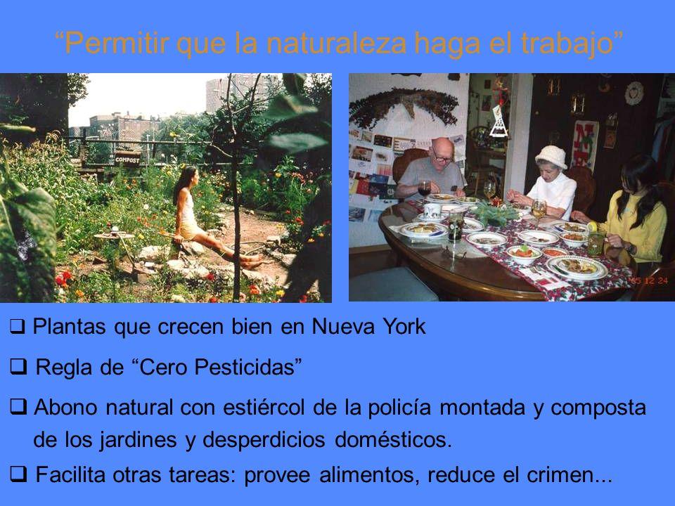 Permitir que la naturaleza haga el trabajo Plantas que crecen bien en Nueva York Regla de Cero Pesticidas Abono natural con estiércol de la policía montada y composta de los jardines y desperdicios domésticos.