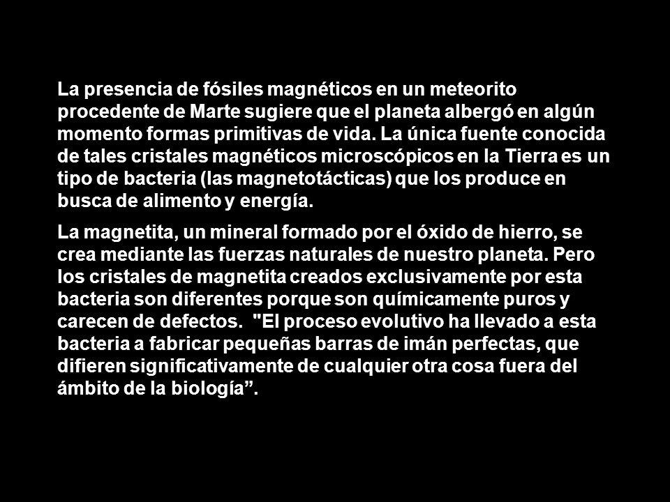 La presencia de fósiles magnéticos en un meteorito procedente de Marte sugiere que el planeta albergó en algún momento formas primitivas de vida. La ú