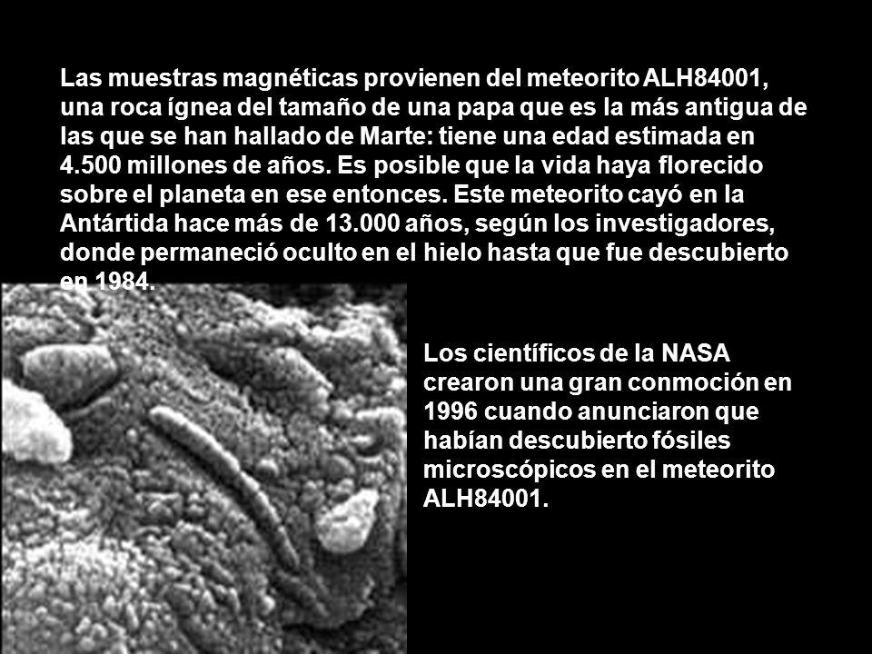 Las muestras magnéticas provienen del meteorito ALH84001, una roca ígnea del tamaño de una papa que es la más antigua de las que se han hallado de Mar
