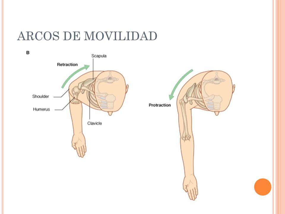 ARCOS DE MOVILIDAD