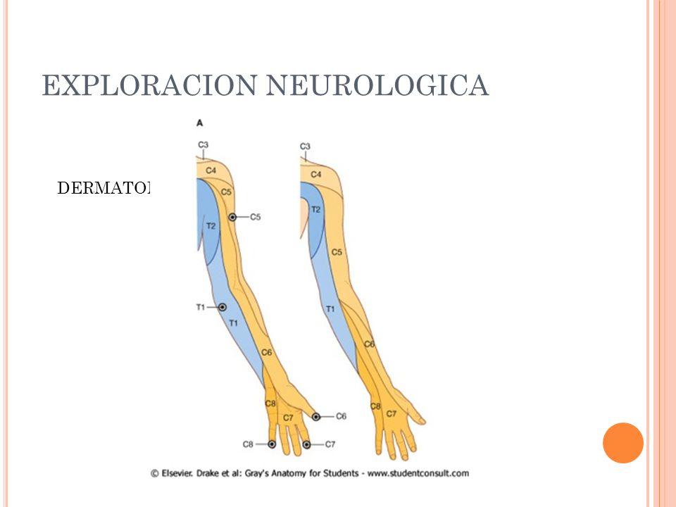 EXPLORACION NEUROLOGICA DERMATOMAS