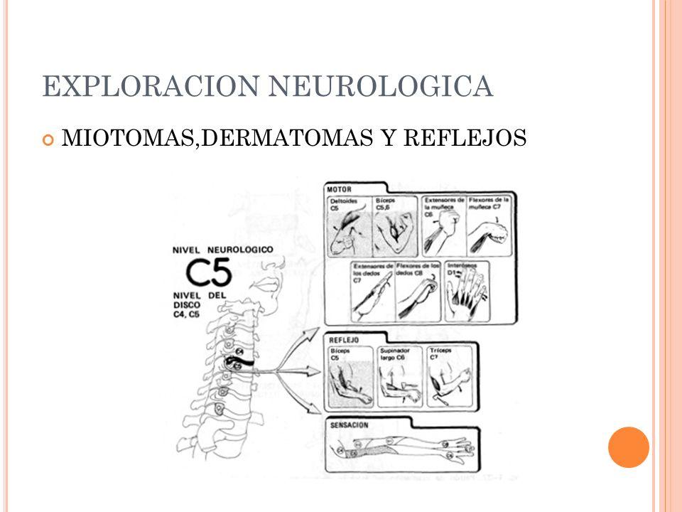EXPLORACION NEUROLOGICA MIOTOMAS,DERMATOMAS Y REFLEJOS