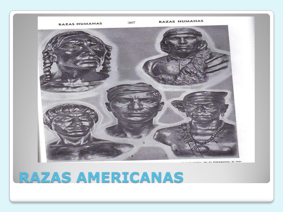 RAZAS AMERICANAS