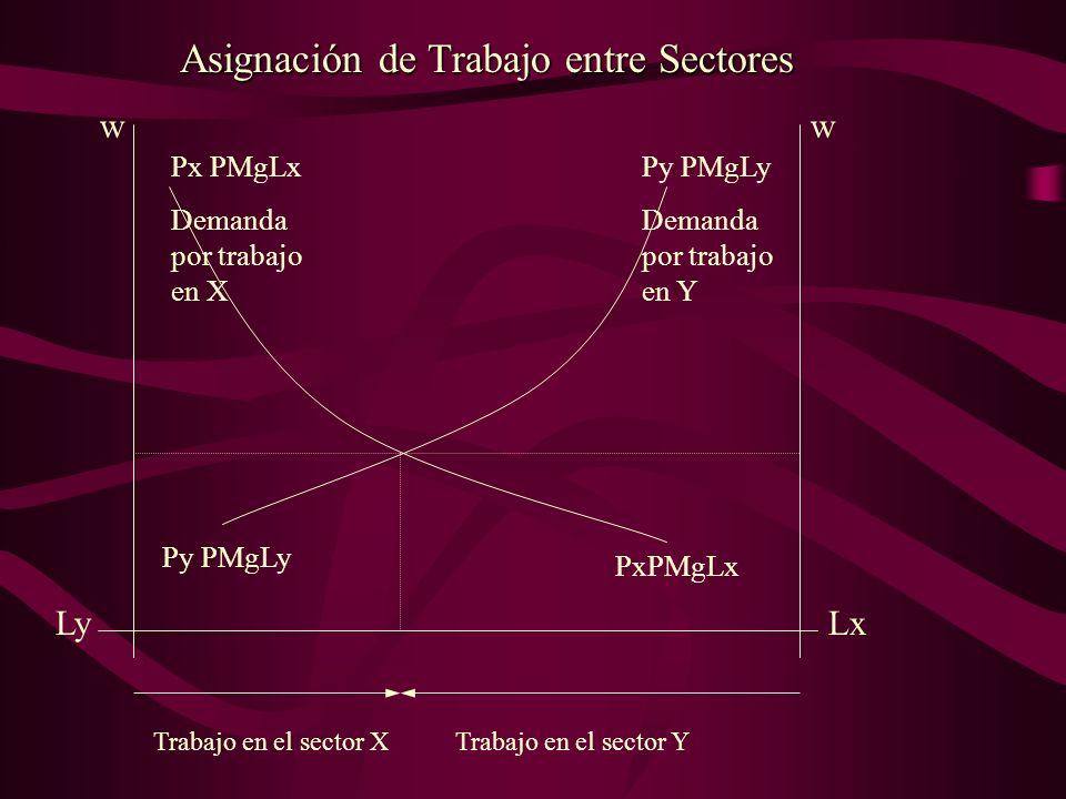 PxPMgLx Py PMgLy Demanda por trabajo en Y LxLy Asignación de Trabajo entre Sectores ww Trabajo en el sector YTrabajo en el sector X Px PMgLx Demanda p