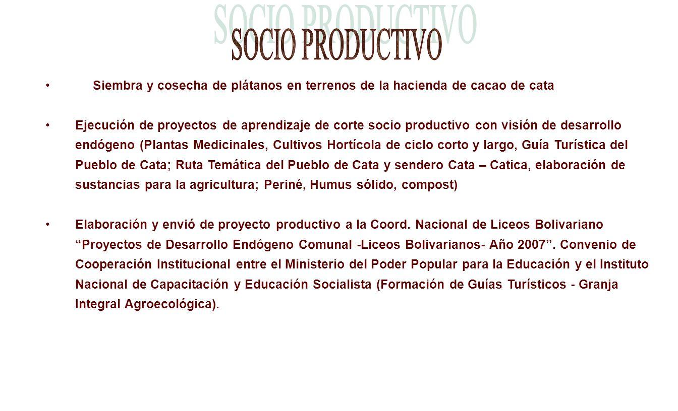 Siembra y cosecha de plátanos en terrenos de la hacienda de cacao de cata Ejecución de proyectos de aprendizaje de corte socio productivo con visión d
