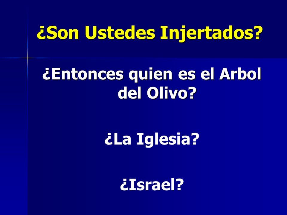 ¿Son Ustedes Injertados? ¿Entonces quien es el Arbol del Olivo? ¿La Iglesia? ¿Israel?