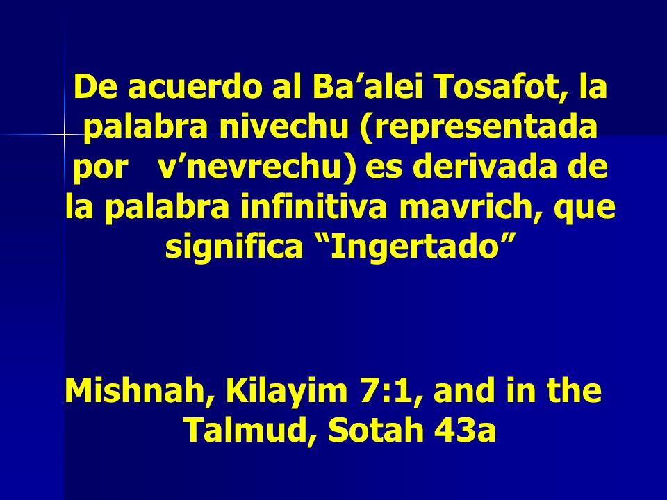 De acuerdo al Baalei Tosafot, la palabra nivechu (representada por vnevrechu) es derivada de la palabra infinitiva mavrich, que significa Ingertado Mi