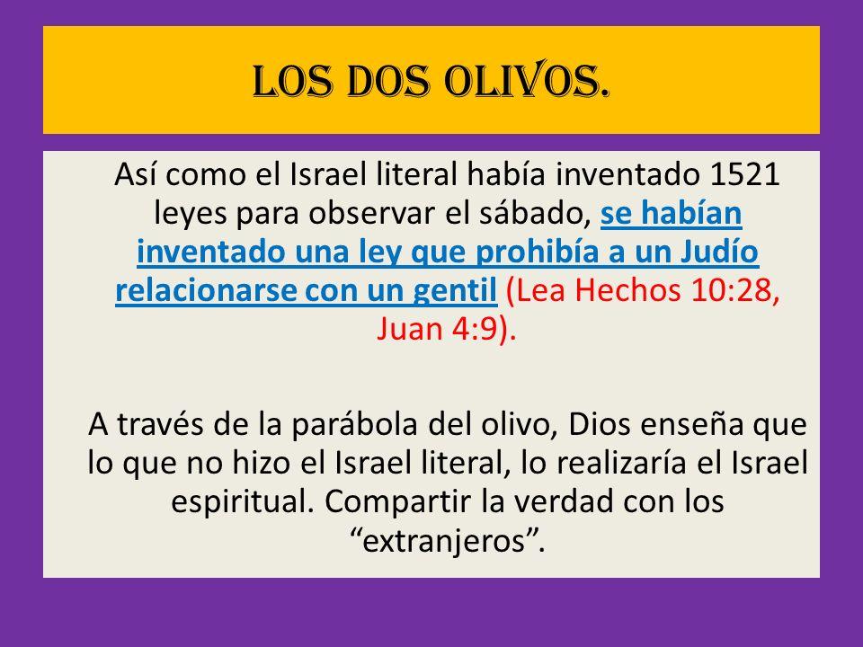 Los dos olivos. Así como el Israel literal había inventado 1521 leyes para observar el sábado, se habían inventado una ley que prohibía a un Judío rel