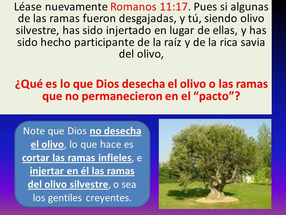 Léase nuevamente Romanos 11:17. Pues si algunas de las ramas fueron desgajadas, y tú, siendo olivo silvestre, has sido injertado en lugar de ellas, y