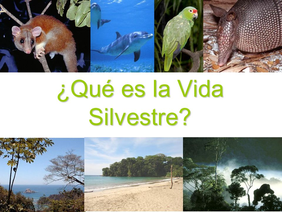 Parque Zoológico Simón Bolívar Se ubica en San JoséSe ubica en San José En este lugar viven alrededor de 400 animales y 150 especies de plantas nativasEn este lugar viven alrededor de 400 animales y 150 especies de plantas nativas Se encuentran especies de otras regionesSe encuentran especies de otras regiones