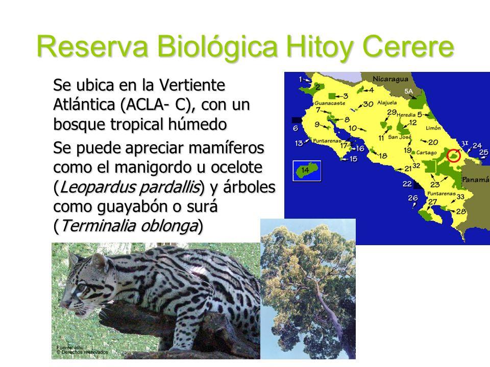 Reserva Biológica Hitoy Cerere Se ubica en la Vertiente Atlántica (ACLA- C), con un bosque tropical húmedo Se puede apreciar mamíferos como el manigor