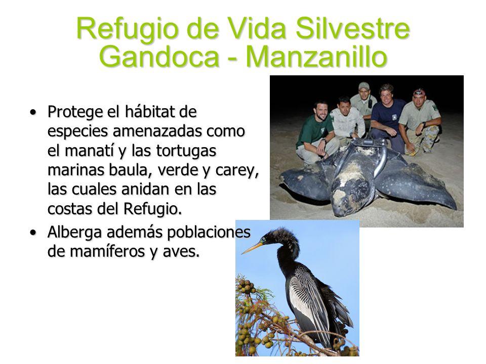 Refugio de Vida Silvestre Gandoca - Manzanillo Protege el hábitat de especies amenazadas como el manatí y las tortugas marinas baula, verde y carey, l