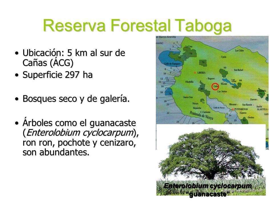 Reserva Forestal Taboga Ubicación: 5 km al sur de Cañas (ÁCG)Ubicación: 5 km al sur de Cañas (ÁCG) Superficie 297 haSuperficie 297 ha Bosques seco y d