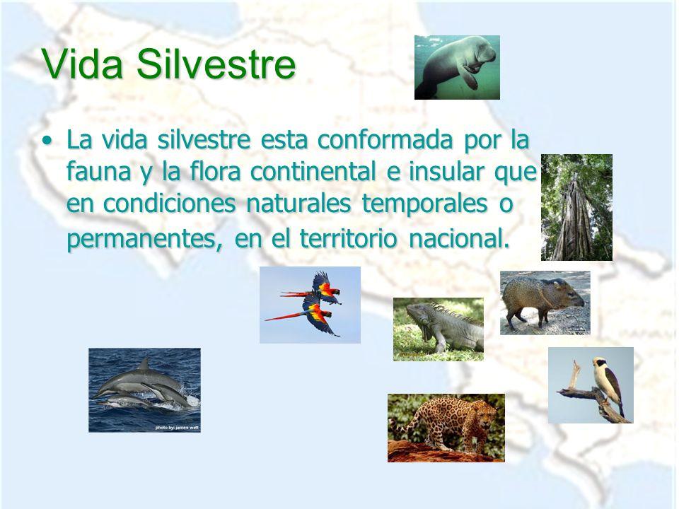 Vida Silvestre La vida silvestre esta conformada por la fauna y la flora continental e insular que vive en condiciones naturales temporales o permanen