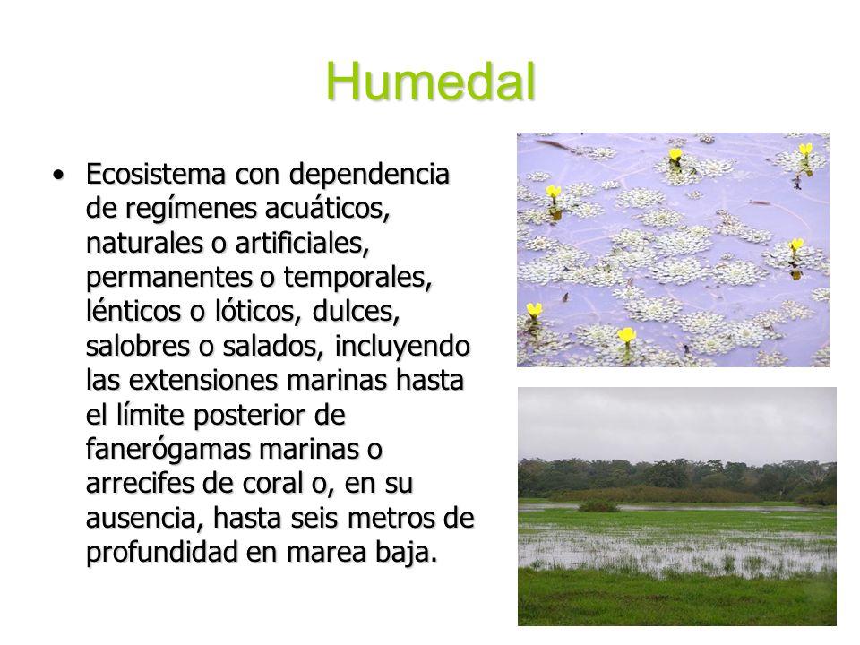 Humedal Ecosistema con dependencia de regímenes acuáticos, naturales o artificiales, permanentes o temporales, lénticos o lóticos, dulces, salobres o