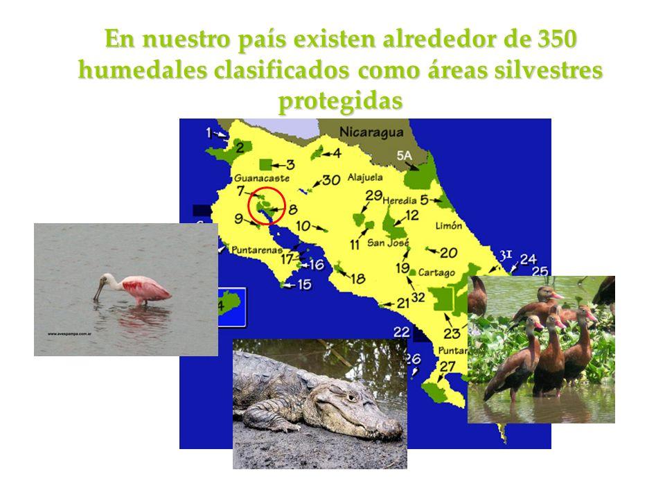 En nuestro país existen alrededor de 350 humedales clasificados como áreas silvestres protegidas