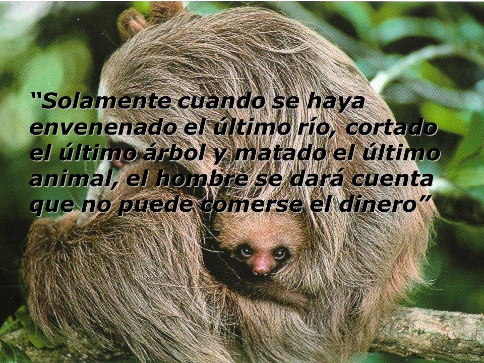 Solamente cuando se haya envenenado el último río, cortado el último árbol y matado el último animal, el hombre se dará cuenta que no puede comerse el