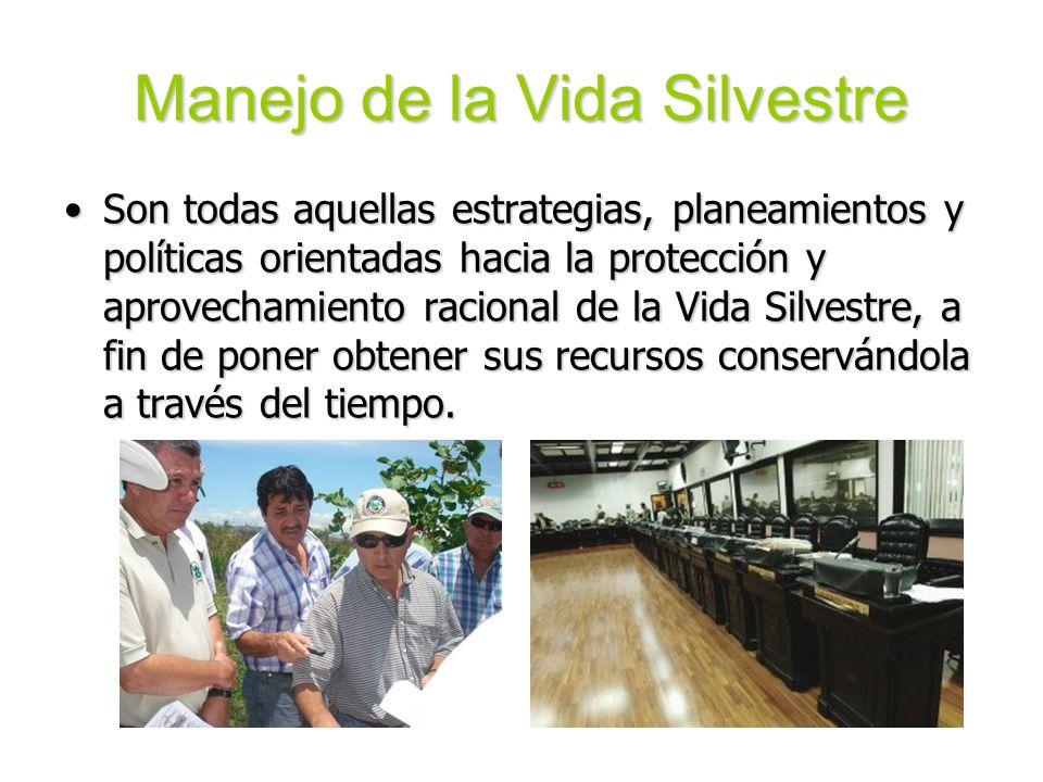 Manejo de la Vida Silvestre Son todas aquellas estrategias, planeamientos y políticas orientadas hacia la protección y aprovechamiento racional de la