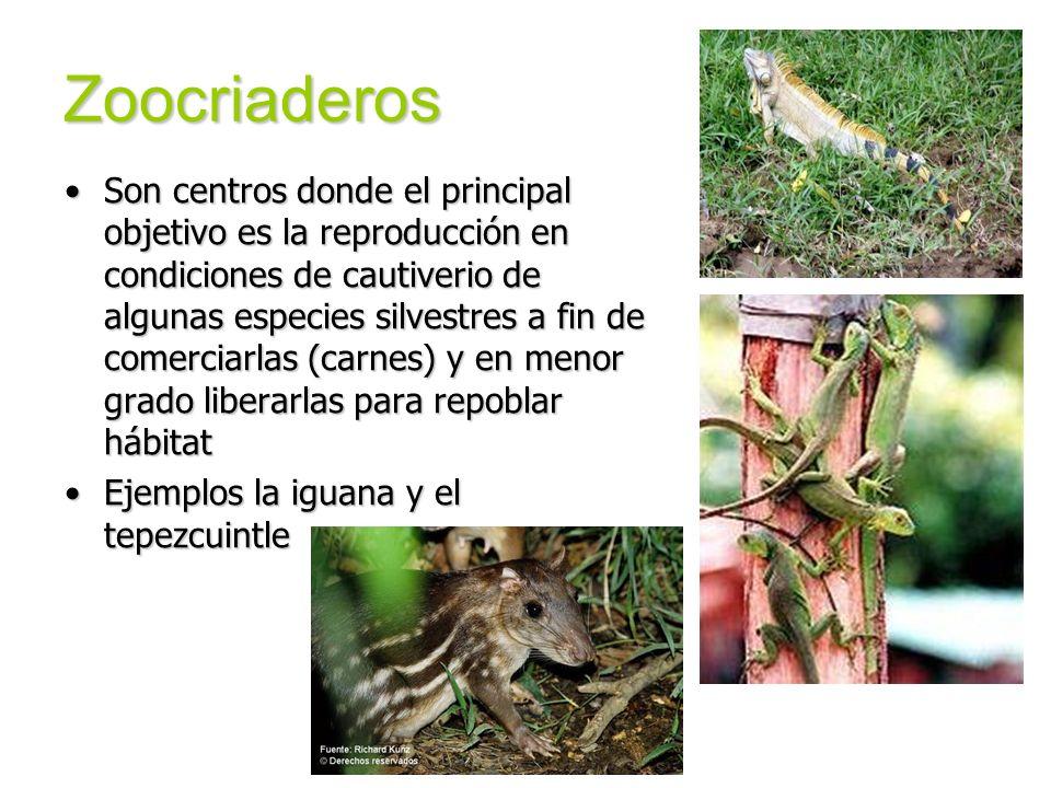 Zoocriaderos Son centros donde el principal objetivo es la reproducción en condiciones de cautiverio de algunas especies silvestres a fin de comerciar