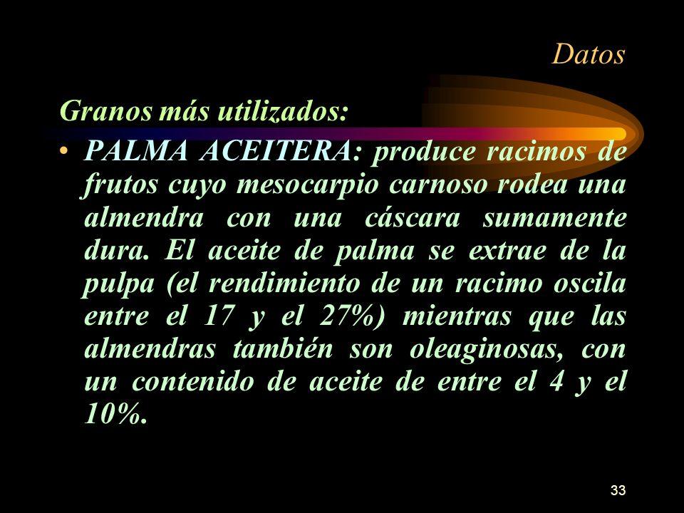 33 Datos Granos más utilizados: PALMA ACEITERA: produce racimos de frutos cuyo mesocarpio carnoso rodea una almendra con una cáscara sumamente dura. E