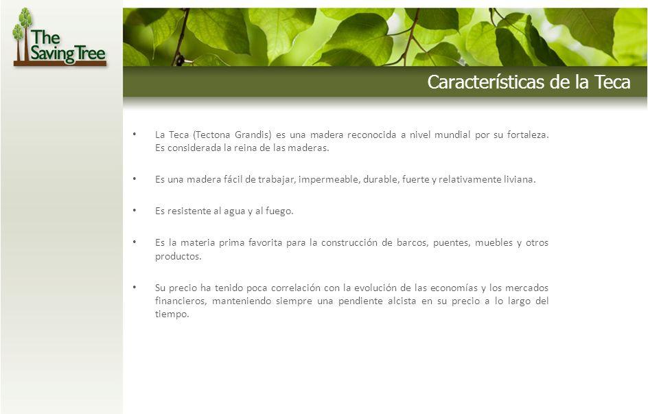 Características de la Teca La Teca (Tectona Grandis) es una madera reconocida a nivel mundial por su fortaleza. Es considerada la reina de las maderas