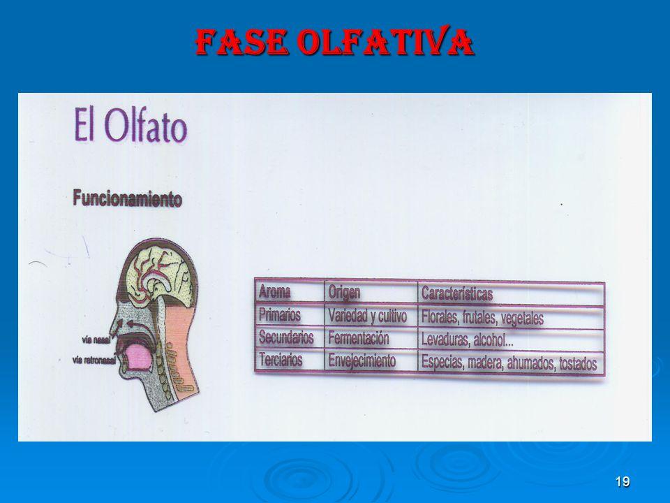 19 FASE OLFATIVA