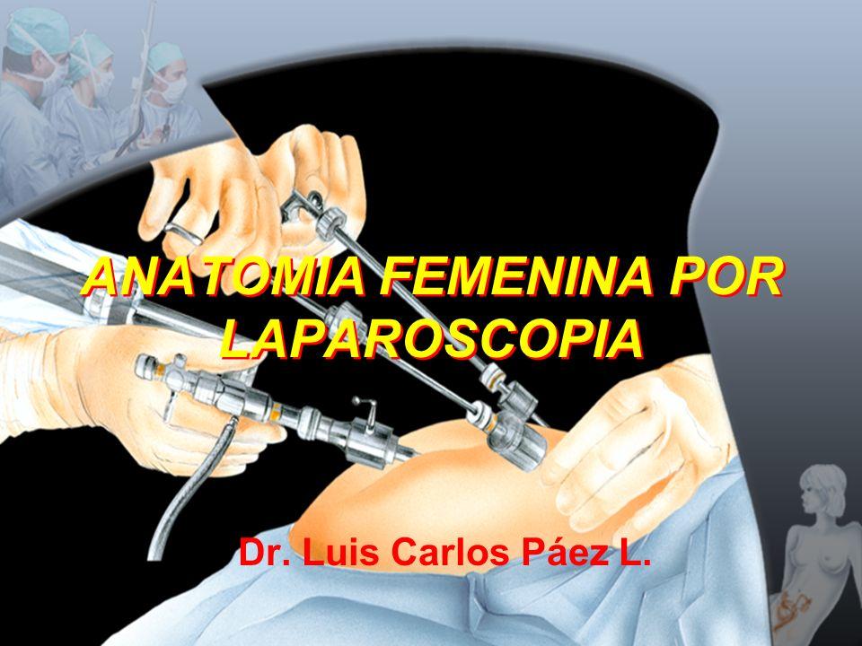 ANATOMIA FEMENINA POR LAPAROSCOPIA Dr. Luis Carlos Páez L.