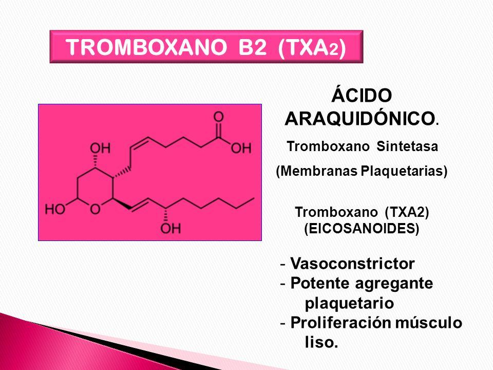 TROMBOXANO B2 (TXA 2 ) ÁCIDO ARAQUIDÓNICO. Tromboxano Sintetasa (Membranas Plaquetarias) Tromboxano (TXA2) (EICOSANOIDES) - Vasoconstrictor - Potente