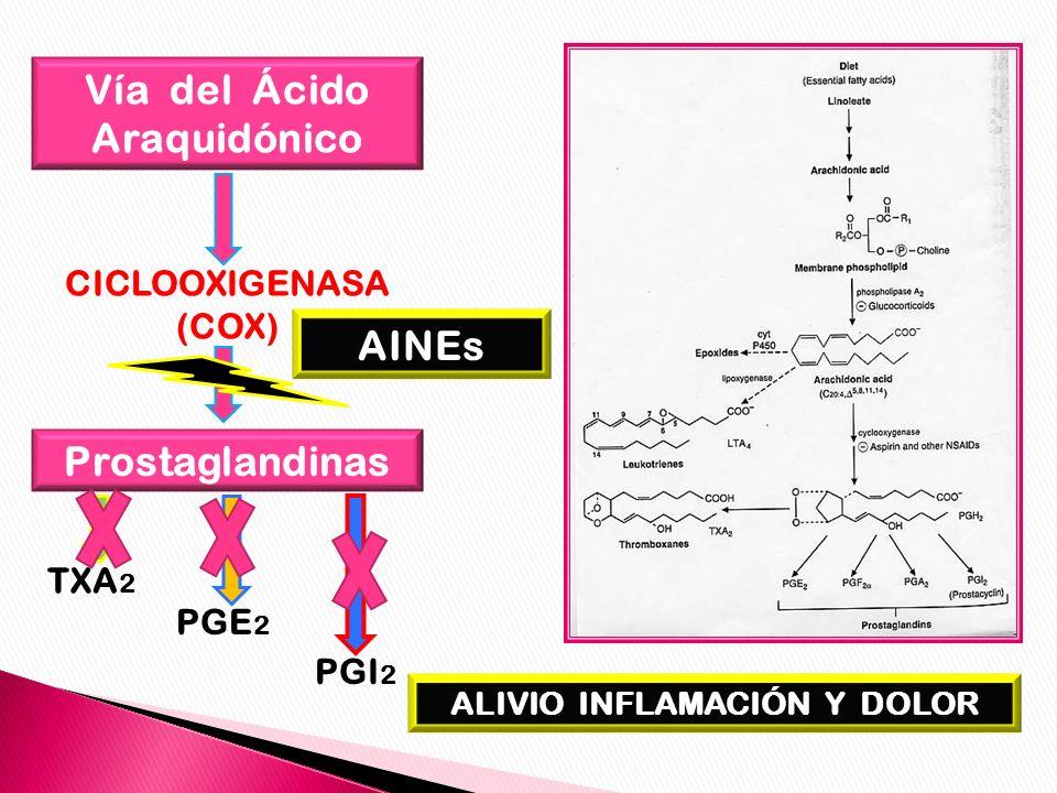 Vía del Ácido Araquidónico CICLOOXIGENASA (COX) Prostaglandinas TXA 2 PGE 2 PGI 2 AINEs ALIVIO INFLAMACIÓN Y DOLOR