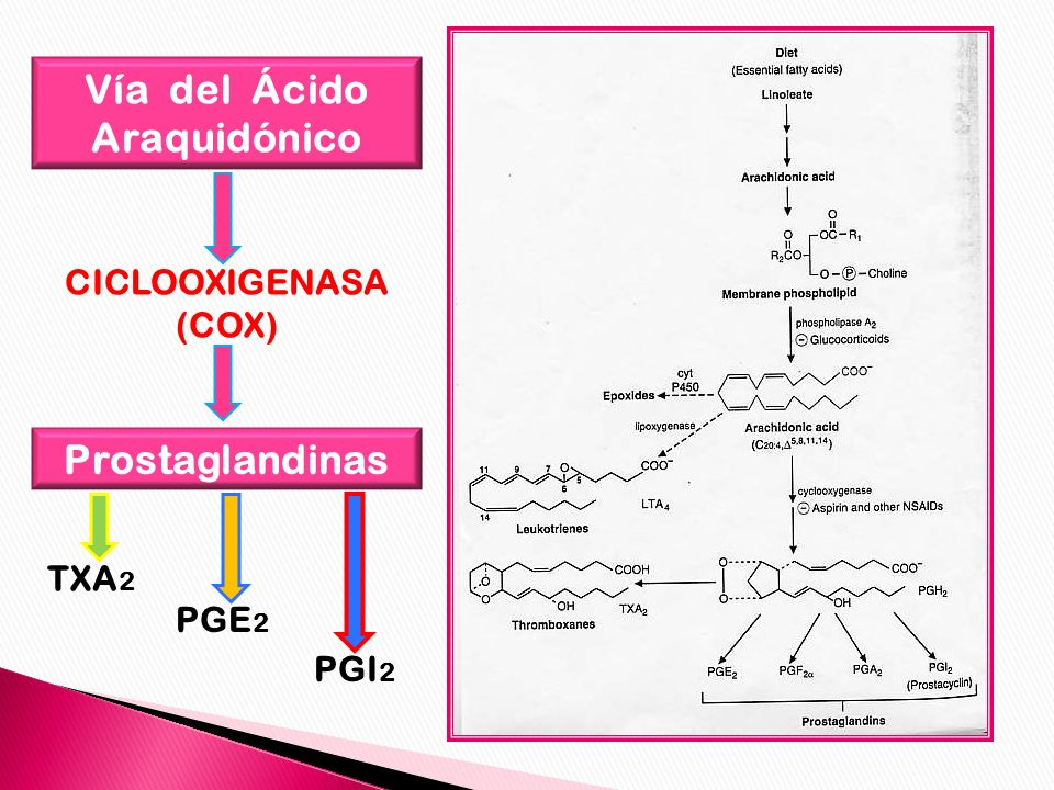 Vía del Ácido Araquidónico CICLOOXIGENASA (COX) Prostaglandinas TXA 2 PGE 2 PGI 2