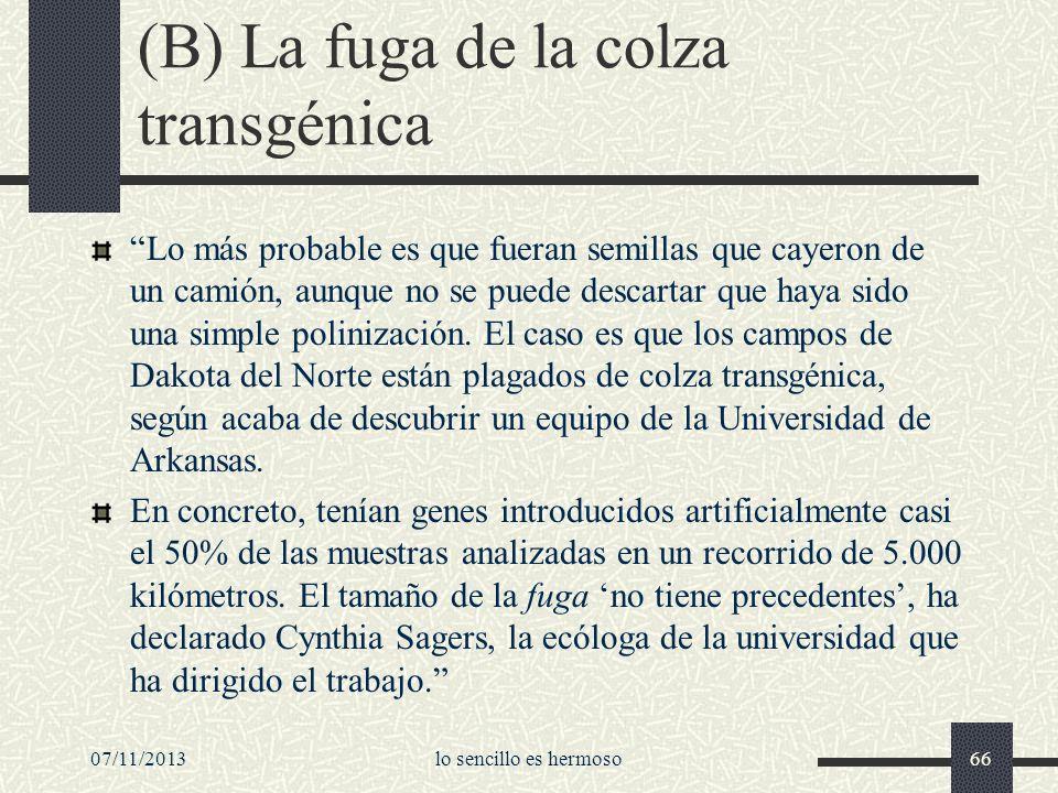 (B) La fuga de la colza transgénica Lo más probable es que fueran semillas que cayeron de un camión, aunque no se puede descartar que haya sido una si