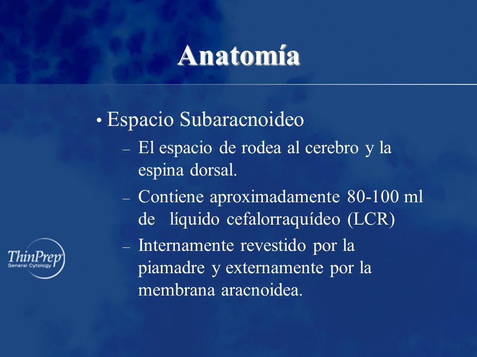 Anatomía Espacio Subaracnoideo – El espacio de rodea al cerebro y la espina dorsal. – Contiene aproximadamente 80-100 ml de líquido cefalorraquídeo (L