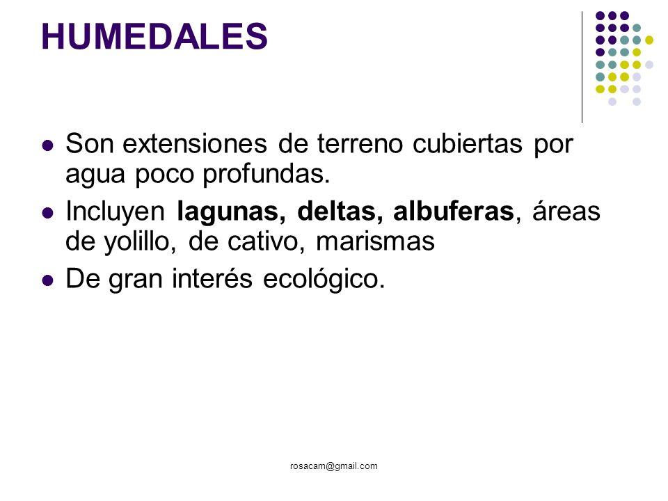 rosacam@gmail.com HUMEDALES Son extensiones de terreno cubiertas por agua poco profundas. Incluyen lagunas, deltas, albuferas, áreas de yolillo, de ca