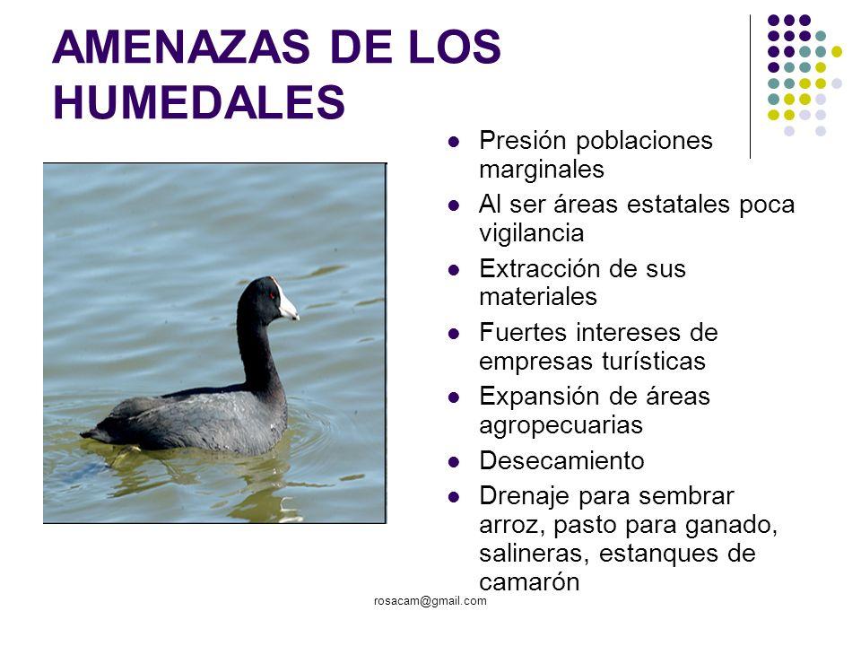 rosacam@gmail.com AMENAZAS DE LOS HUMEDALES Presión poblaciones marginales Al ser áreas estatales poca vigilancia Extracción de sus materiales Fuertes