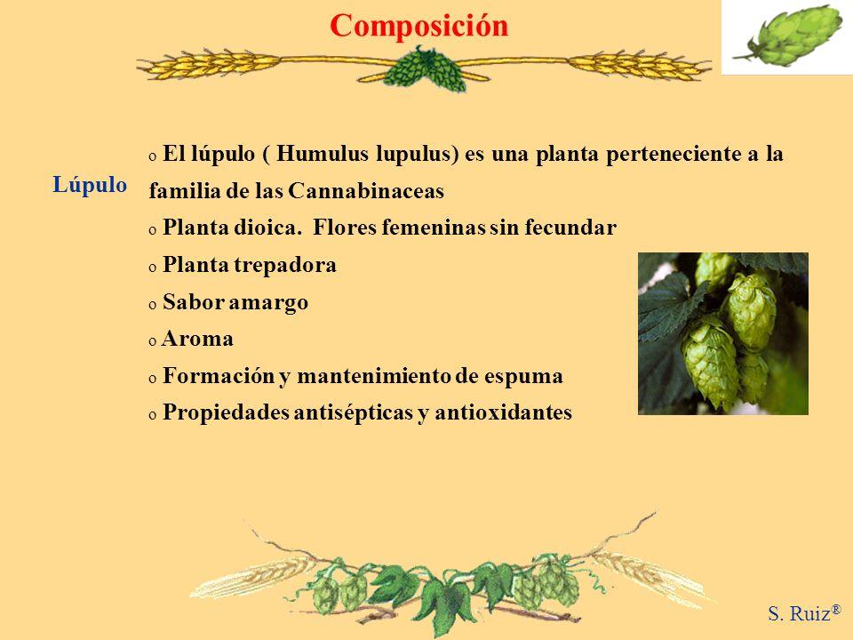 Composición o El lúpulo ( Humulus lupulus) es una planta perteneciente a la familia de las Cannabinaceas o Planta dioica. Flores femeninas sin fecunda