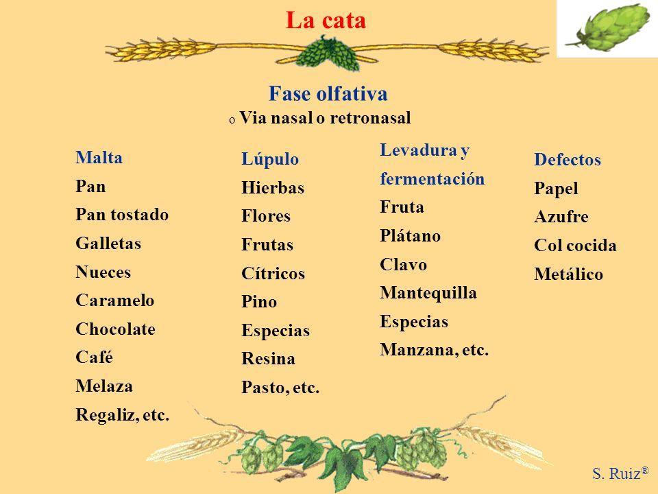 o Via nasal o retronasal Fase olfativa La cata Malta Pan Pan tostado Galletas Nueces Caramelo Chocolate Café Melaza Regaliz, etc. Levadura y fermentac