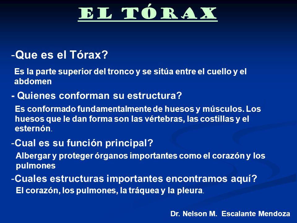 El Tórax Dr. Nelson M. Escalante Mendoza -Que es el Tórax? - Quienes conforman su estructura? -Cual es su función principal? -Cuales estructuras impor