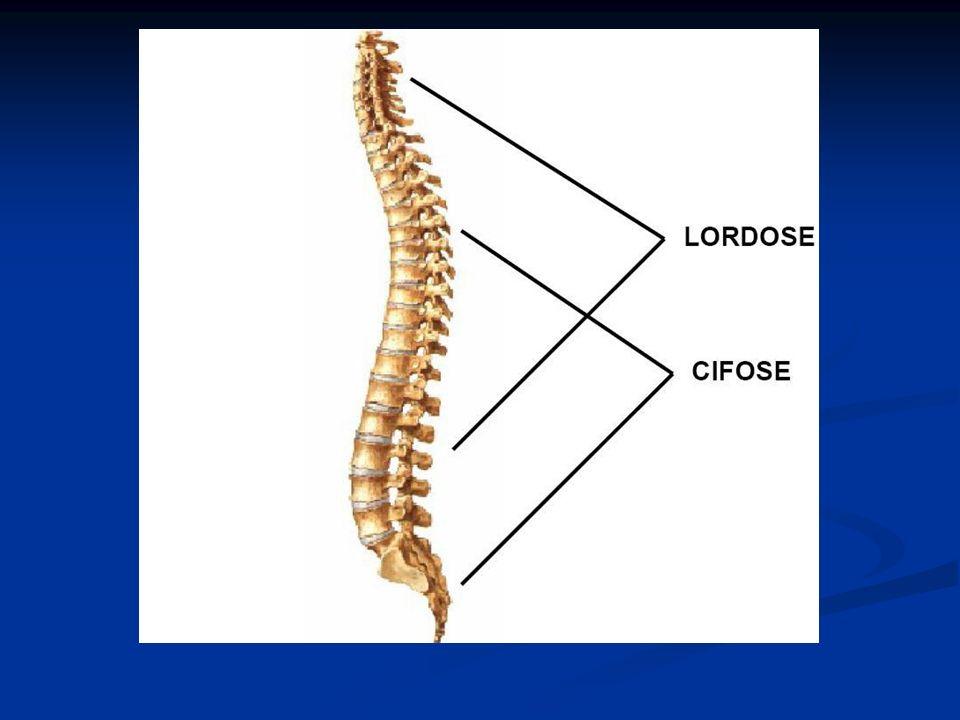 El Atlas (C1): - No tiene cuerpo - No tiene proceso espinoso - Es la más ancha vértebra cervical - Porque su nombre.