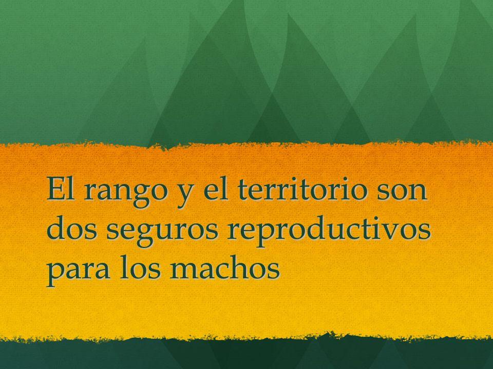 El rango y el territorio son dos seguros reproductivos para los machos