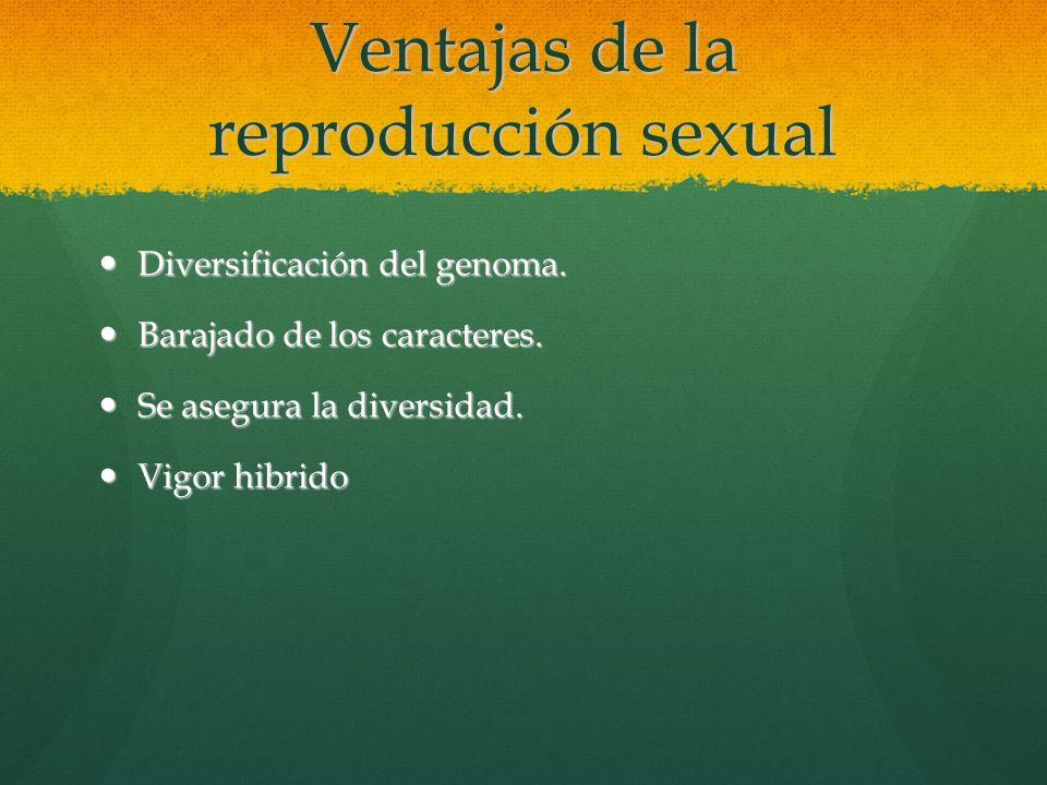 Ventajas de la reproducción sexual Diversificación del genoma. Diversificación del genoma. Barajado de los caracteres. Barajado de los caracteres. Se