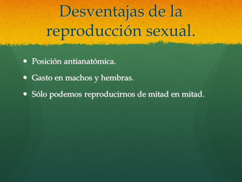 Desventajas de la reproducción sexual. Posición antianatómica. Posición antianatómica. Gasto en machos y hembras. Gasto en machos y hembras. Sólo pode